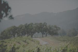 Napa Valley Winery Wedding